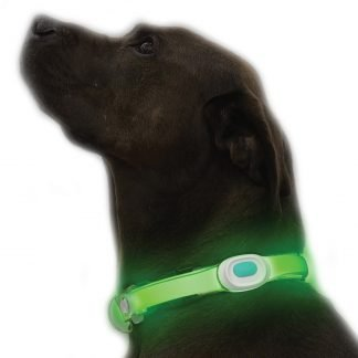 LightUp Dog Collar